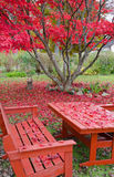 Late autumn in home garden Stock Photography