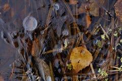 Late autumn lake view. Royalty Free Stock Photo
