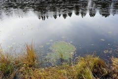 Late autumn lake Stock Image