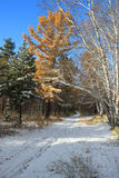 Late autumn landscape - first snow in mixed forest Stock Photo