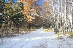 Late autumn landscape - first snow in mixed forest Royalty Free Stock Photos