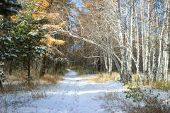 Late autumn landscape - first snow in mixed forest Royalty Free Stock Photography