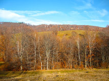Late autumn landscape with forests in the distance Stock Image
