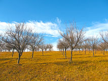 Late autumn landscape with orchard and clear blue sky Stock Photography