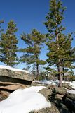 Pines, rocks and snow at the sunny day. Stock Images