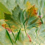 Late autumn leaf. Leaf and grass in late autumn colors Royalty Free Stock Images