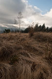 Late autumn meadow in Moravskoslezske Beskydy mountains Royalty Free Stock Photography