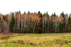 Late autumn in the mixed forest. Dry grass Royalty Free Stock Image