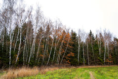 Late autumn in the mixed forest. Dry grass Royalty Free Stock Images