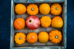 Late Autumn Orange Harvest Fruits and Vegetable Royalty Free Stock Images