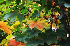 Autumn orange leaves, yellow green natural background, close up Stock Image