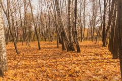 Late autumn in the park covered by the leaves. Horizontal photo, photo took in   Moscow, Russian, photo is usable on picture post card, calendar, gardening Royalty Free Stock Images