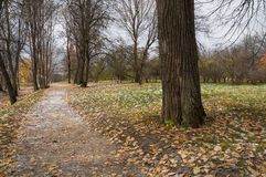 Late autumn in the park Stock Images