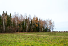 Late autumn in pine forest, landscape Royalty Free Stock Photography