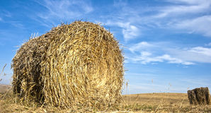 Late autumn products. Hay bales on a field in late autumn Stock Photo