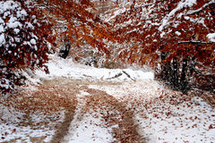 Late autumn scenery Royalty Free Stock Images