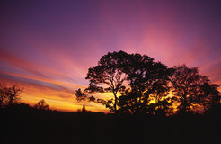 Late  Autumn Sunset. Trees silloutetted by a colourful late autumn sunset Royalty Free Stock Photos