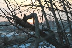 Naked tree branches against the sunset. Royalty Free Stock Photos