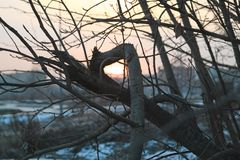 Naked tree branches against the sunset. Stock Photo