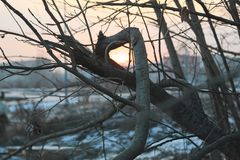Naked tree branches against the sunset. Stock Photography