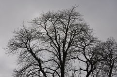 Late autumn tree in one day with heavy cloud cover Royalty Free Stock Image