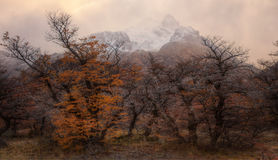 Late Autumn Trees with Mountains in the Background Royalty Free Stock Image