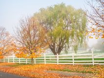 Late Autumn Weeping Willow Stock Images