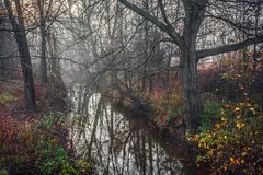 Morning Fog on Creek Stock Photography