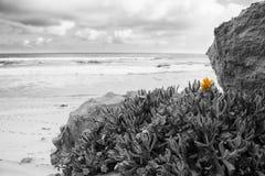 Late evening landscape beach over rocky shore and beach vegitati Royalty Free Stock Photo
