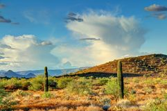 Sonoran Desert. Late evening light illuminating the saguaros and mountains in the Sonoran Desert in High Dynamic Range Stock Photos