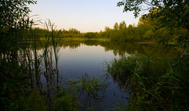 Late Evening Pond Royalty Free Stock Image
