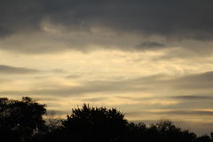 Late evening  sky. Dark trees with a late evening sky Royalty Free Stock Photography