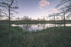 Late evening sun over swamp lakes in summer - vintage retro film look. Late evening sun over swamp lakes in summer, reflections in calm water and green foliage royalty free stock images