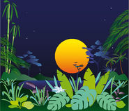 The late evening in tropics. The big moon, lake, a rainforest, the silent summer late evening Royalty Free Stock Image