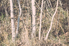 Late fall colors in dunes near the sea. Vintage. Royalty Free Stock Photography