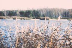 Late fall colors in dunes near the sea. Vintage. Stock Photography