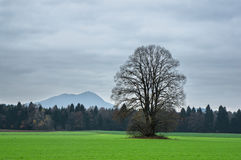 Late fall day. Among green fields stock images