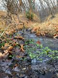 Late Fall forest stream close up, views hiking, biking, horseback trails through trees on the Yellow Fork and Rose Canyon Trails i. N Oquirrh Mountains on the Royalty Free Stock Photo