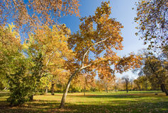 Late fall int the park. Royalty Free Stock Photo