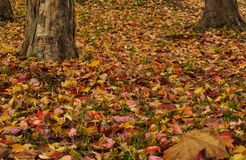 the late fall leaves of a park royalty free stock photography