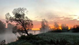 Late frost. Fog and late frost near river Royalty Free Stock Photo