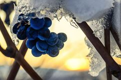 Late grapes of Barolo Italy at sunset covered by the first snows. Barolo Langhe: Piedmont, Italy: winter sunset in the vineyards with the last small grapes of Stock Photo