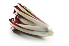 Late Red Treviso radicchio Royalty Free Stock Image