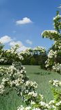 Late spring bouquet of flowers.  royalty free stock photography