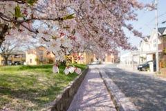 Sakura Petals Falling on Road Royalty Free Stock Image