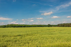 Late Spring, Early Summer landscape of ceral field in Germany Stock Photo