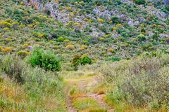 Late Spring Greek Landscape With Yellow and Green Plants. A late Spring rural mountain side landscape with a dirt access road, with trees, weeds and native royalty free stock photos