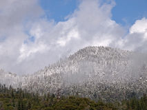 Late spring  snow storm in yosemite valley. Royalty Free Stock Photos