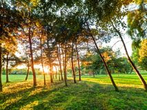 Late summer, autumn sunset in a park Royalty Free Stock Image