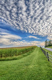 Late Summer Corn Field With Nice Cloudy Sky Royalty Free Stock Photo